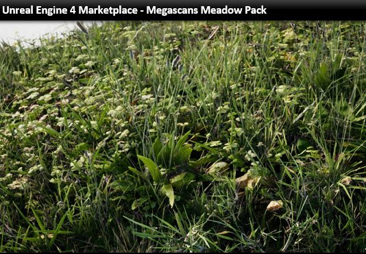 Megascans Meadow Pack for Unreal Engine 4 - uparchvip