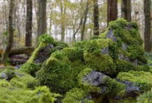 Photo of CGTrader – Moss 7 Species and Stones – PBR Asset Kit Low-poly 3D models