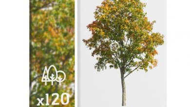 Photo of Forest/Digital Vol. 5 – Autumn trees