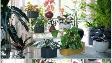 Photo of Maxtree – Plant Models Vol. 62